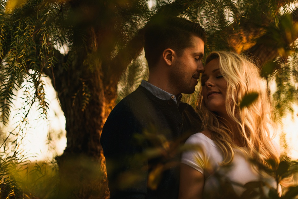 sunset willow tree engagement photography