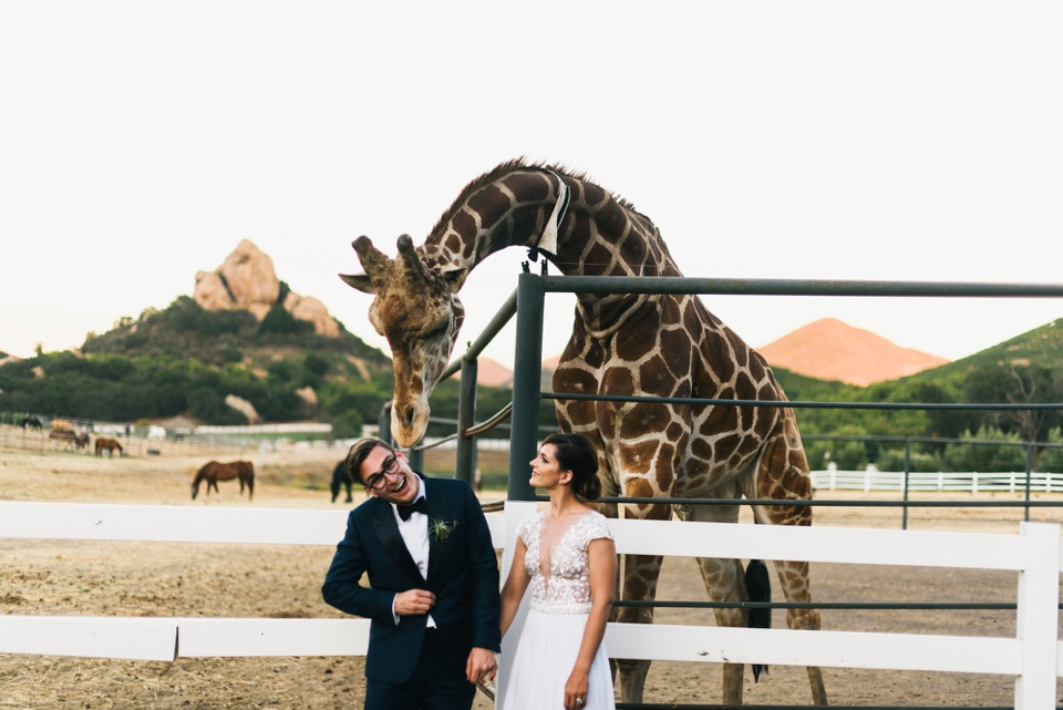 Saddlerock Ranch Bride and Groom photo with giraffe